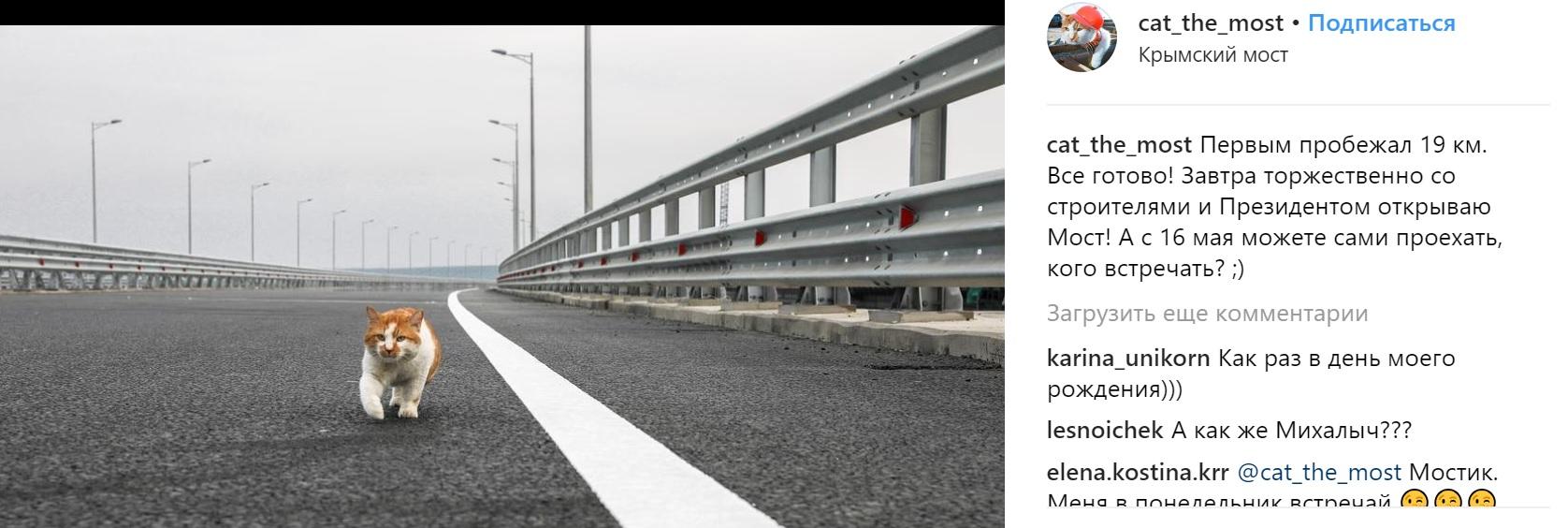 Кот Мостик одобрил открытие моста