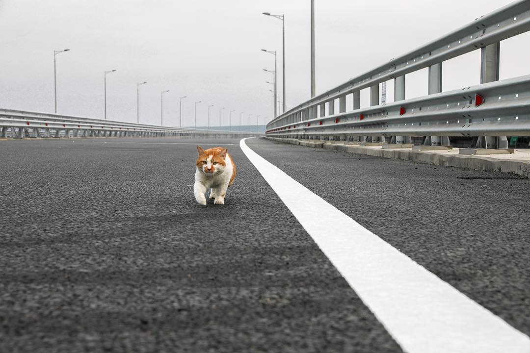 Кот Мостик прошелся по Крымскому мосту